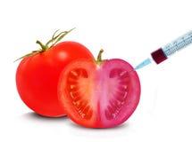 Ντομάτα ΓΤΟ Στοκ φωτογραφίες με δικαίωμα ελεύθερης χρήσης