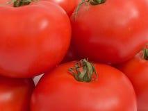 ντομάτα δεσμών στοκ φωτογραφίες με δικαίωμα ελεύθερης χρήσης
