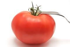ντομάτα δικράνων Στοκ φωτογραφία με δικαίωμα ελεύθερης χρήσης