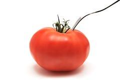 ντομάτα δικράνων Στοκ Εικόνα