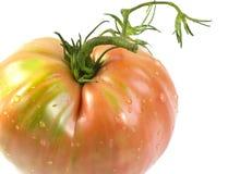 Ντομάτα καρδιών βοδιών Στοκ εικόνες με δικαίωμα ελεύθερης χρήσης