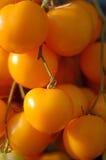 ντομάτα κερασιών κίτρινη Στοκ Εικόνα