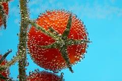 ντομάτα κερασιών φυσαλίδ&om Στοκ φωτογραφίες με δικαίωμα ελεύθερης χρήσης