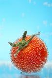ντομάτα κερασιών φυσαλίδ&om Στοκ Φωτογραφίες