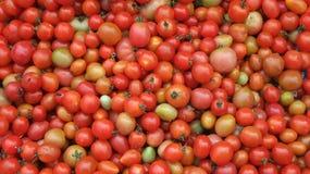 Ντομάτα κερασιών Στοκ Φωτογραφίες