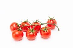 Ντομάτα κερασιών Στοκ Εικόνες