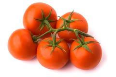 ντομάτα κλάδων Στοκ Εικόνες