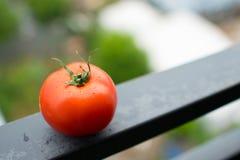 Ντομάτα σε μια ακτίνα μετάλλων Στοκ εικόνες με δικαίωμα ελεύθερης χρήσης
