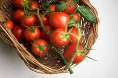 ντομάτα σταφυλιών στοκ εικόνα με δικαίωμα ελεύθερης χρήσης