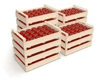 Ντομάτα στα κλουβιά Στοκ εικόνες με δικαίωμα ελεύθερης χρήσης