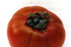 Ντομάτα στην άσπρη ανασκόπηση Στοκ Εικόνες