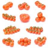 ντομάτα συλλογής Στοκ Φωτογραφία