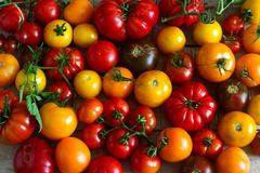 Ντομάτα των διαφορετικών ποικιλιών σε ένα ξύλινο υπόβαθρο Στοκ εικόνα με δικαίωμα ελεύθερης χρήσης