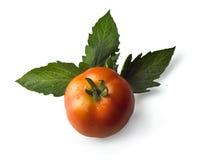 ντομάτα Στοκ εικόνες με δικαίωμα ελεύθερης χρήσης