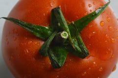 Ντομάτα Στοκ φωτογραφία με δικαίωμα ελεύθερης χρήσης