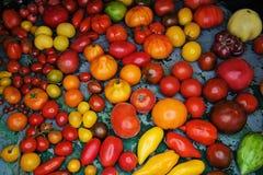 Ντομάτα Στοκ Φωτογραφίες