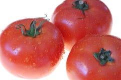 ντομάτα 5 στοκ εικόνες