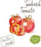 Ντομάτα Watercolor ελεύθερη απεικόνιση δικαιώματος