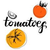 Ντομάτες λέξης καλλιγραφίας Διανυσματική απεικόνιση