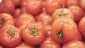 ντομάτες αγοράς απόθεμα βίντεο