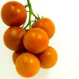 Ντομάτες αμπέλων Στοκ φωτογραφία με δικαίωμα ελεύθερης χρήσης
