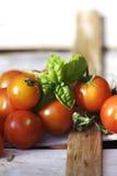 ντομάτες βασιλικού στοκ φωτογραφία με δικαίωμα ελεύθερης χρήσης