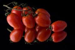 ντομάτες δροσιάς στοκ φωτογραφία