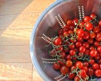 Ντομάτες θερινών κερασιών Στοκ Φωτογραφίες