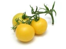 ντομάτες κίτρινες Στοκ Εικόνες