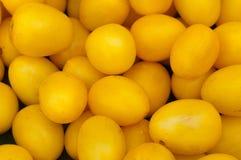 ντομάτες κίτρινες Στοκ εικόνα με δικαίωμα ελεύθερης χρήσης
