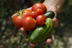 Ντομάτες και αγγούρια Στοκ Φωτογραφία