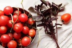 Ντομάτες και βασιλικός στοκ φωτογραφία με δικαίωμα ελεύθερης χρήσης