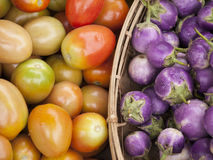 Ντομάτες και μελιτζάνα Στοκ Εικόνες