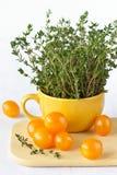 ντομάτες κερασιών κίτριν&epsilon Στοκ Εικόνες