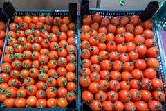 Ντομάτες κερασιών στην αγορά, τοπ άποψη Στοκ εικόνα με δικαίωμα ελεύθερης χρήσης