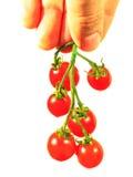 Ντομάτες κερασιών στο χέρι που απομονώνεται στο λευκό Στοκ φωτογραφίες με δικαίωμα ελεύθερης χρήσης