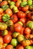 Ντομάτες, κινηματογράφηση σε πρώτο πλάνο Στοκ φωτογραφία με δικαίωμα ελεύθερης χρήσης