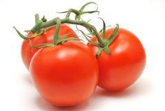 ντομάτες κλάδων Στοκ εικόνα με δικαίωμα ελεύθερης χρήσης
