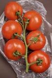 ντομάτες κλάδων Στοκ Εικόνες