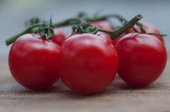 Ντομάτες κοκτέιλ στοκ εικόνα