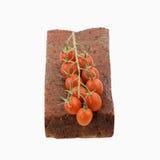 ντομάτες κοκτέιλ Στοκ εικόνες με δικαίωμα ελεύθερης χρήσης
