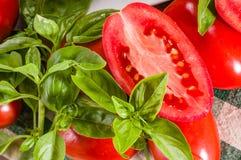 Ντομάτες κολλών με το βασιλικό που τεμαχίζεται Στοκ Εικόνες