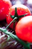 ντομάτες μαρουλιού φύλλων Στοκ εικόνες με δικαίωμα ελεύθερης χρήσης