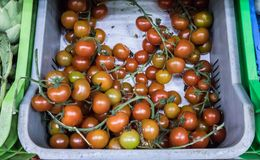 Ντομάτες μωρών στην υπεραγορά στοκ φωτογραφία με δικαίωμα ελεύθερης χρήσης