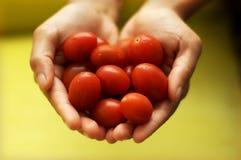 ντομάτες μωρών Στοκ φωτογραφίες με δικαίωμα ελεύθερης χρήσης