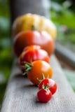 Ντομάτες οικογενειακών κειμηλίων Στοκ εικόνες με δικαίωμα ελεύθερης χρήσης