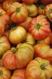 ντομάτες οικογενειακώ&nu Στοκ εικόνες με δικαίωμα ελεύθερης χρήσης