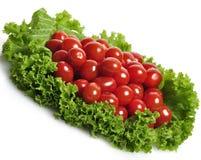 ντομάτες σαλάτας φύλλων Στοκ Φωτογραφίες