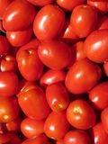 ντομάτες σειράς τροφίμων ανασκόπησης Στοκ εικόνες με δικαίωμα ελεύθερης χρήσης