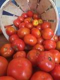 ντομάτες σε ένα κλουβί Στοκ φωτογραφία με δικαίωμα ελεύθερης χρήσης